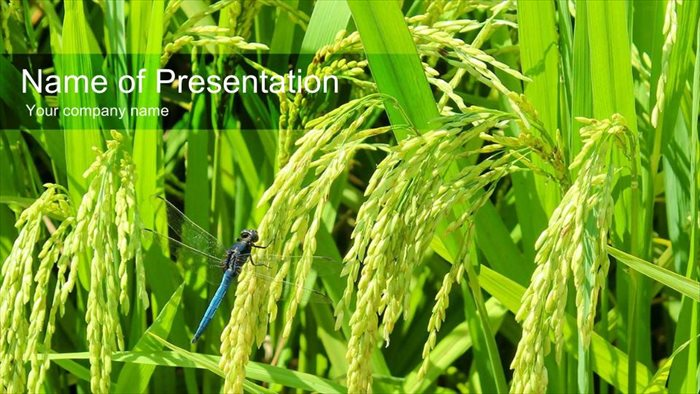 お米の成長