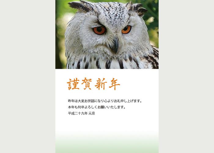 年賀状「フクロウ」