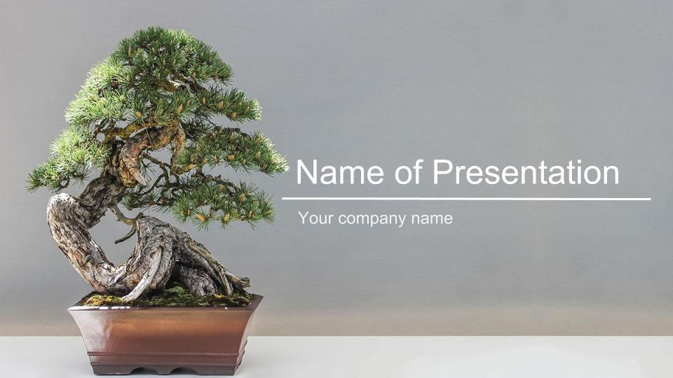 テーマ「盆栽(松)」